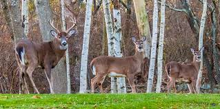 the deer family earthly image photography