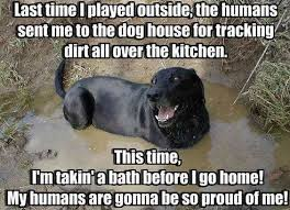Black Lab Meme - 12 best labrador memes of all time