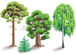 Tree Type Images U0026 Stock Pictures Royalty Free Tree Type Photos