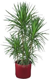 houseplants that require medium light in boston u0026 canton ma