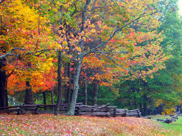 2017 fall foliage reston leaves change colors