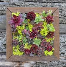 86 best succulents wall art images on pinterest succulent wall