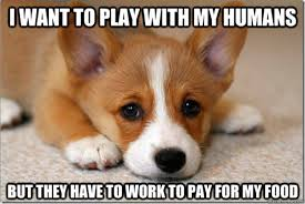 Orange Dog Meme - first world dog problem meme wants to play
