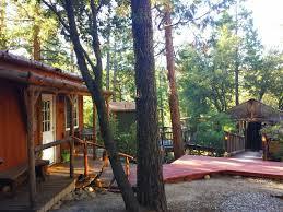 cozy lodge u0026 tiki treehouse pet policy