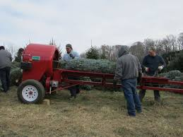 138 best christmas tree farm images on pinterest christmas tree