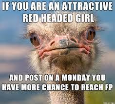 Ostrich Meme - observant ostrich meme on imgur