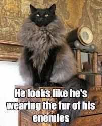 Make Me Laugh Meme - cats that make me laugh
