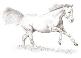 running horse sketching running horse sketches horses a collection