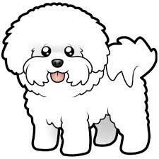 bichon frise years about blinddog old dog new tricks