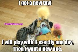 New Cat Meme - the kitten has a new toy funny cat memes