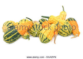 striped orange and green ornamental gourds in different shapes on