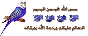 اهداء المنتدى images?q=tbn:ANd9GcT