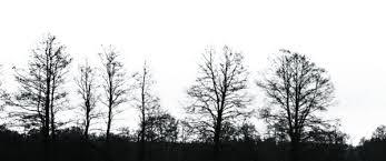 black tree png image png mart