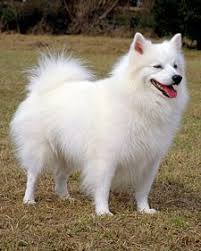 north american eskimo dog association 172 best heartscapes images on pinterest animals american