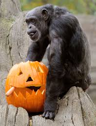 celebrate u0027zoo boo u0027 at houston zoo this weekend the new 95 7