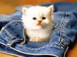 46 top selection of wallpaper cat