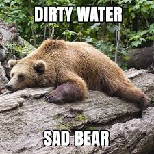 Sad Bear Meme - 7 best water memes images on pinterest aqua gripe water and water