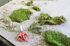 moss art and why failures are sometimes a good thing stacy