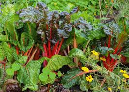 why fall is the best time to grow a vegetable garden garden club