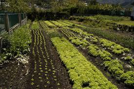 gardening wallpaper
