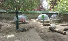groundhog exhibit tunnels bubble domes picture zoo