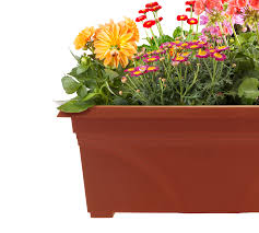 planting a window box planter southern patio