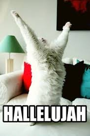 Excited Meme - excited cat memes image memes at relatably com