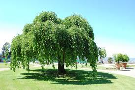 albero giardino sei regole per un albero felice il nostro barganews v 3 0