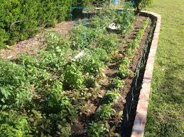 99 best renter u0027s garden images on pinterest plants garden and