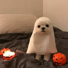 in costumes today is my cake day so here is a bunch of dogs in costumes