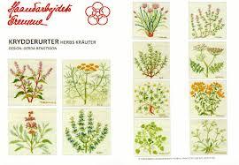herb chart shibonnu rakuten global market フレメ krydderurter herb design