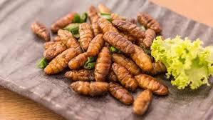 insecte cuisine la cuisine de matthieu recettes et de cuisine