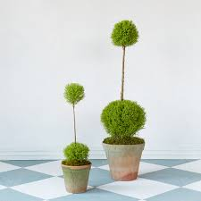 Eugenia Topiary Topiary Style A Dash Of Manicured Charm