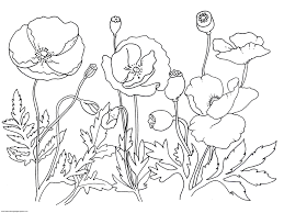 remembrance day poppies blooming flowers free coloring pages