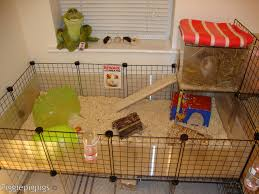 Cages For Guinea Pigs Diy Guinea Pig Cage For 2 Buzzchat Co Do It Yourself