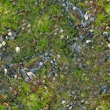 forest ground textures moss 5 png opengameart org