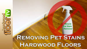 flooring unforgettable removing pet stains from hardwood floors