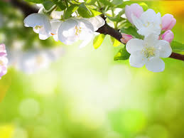 spring flowers wallpapers hd pictures u2013 one hd wallpaper pictures