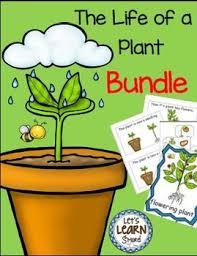 32 best plant investigations images on pinterest investigations