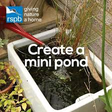 the 25 best garden pond ideas on pinterest