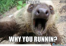 Best Sloth Memes - funny sloth pictures meme funny sloths pinterest funny sloth