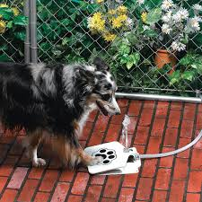 australian shepherd water dog water fountain awesome stuff to buy