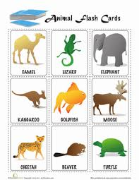 animal flashcards worksheet education
