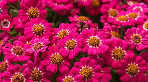 hd images of flowers floral images free download
