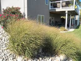 native grasses grimm u0027s gardens