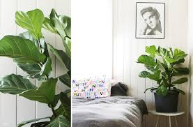 the best indoor plants to add to your space move nourish believe