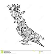 cockatoo parrot coloring book adults vector stock vector