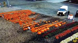 Local Pumpkin Farms In Nj by Nearly 200 Pumpkins Stolen From New Jersey Farm Stand Nbc New York