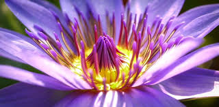 purple flowers purple flowers images pixabay free pictures