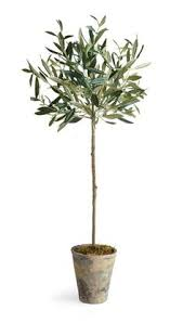 Great Indoor Trees Hgtv by Olive Topiary Home Is Where The Heart Is Pinterest Plants